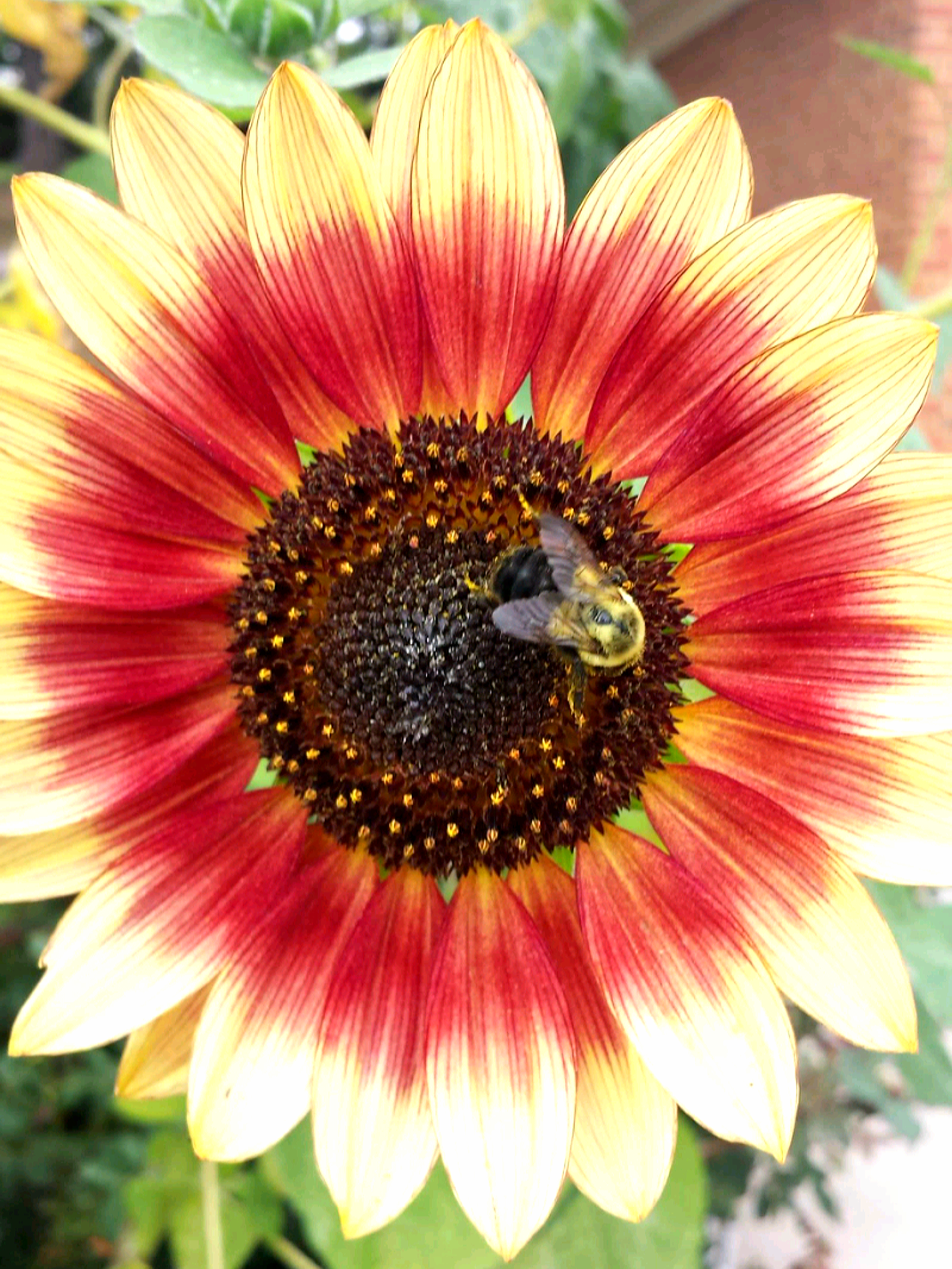Brittany Elswick's photo of a bee on a sunflower is one of several photographers' works displayed in the Du Quoin Public Library Gallery through June. In July, the library will chose new pieces from local photographers' submissions to hang through September.