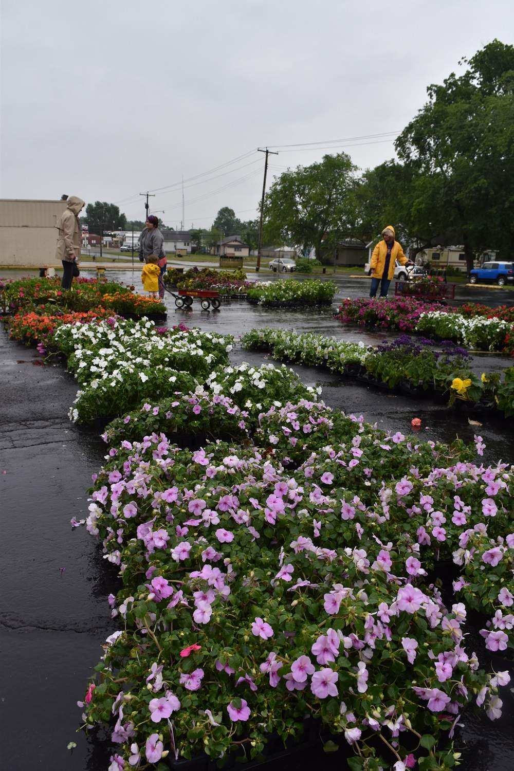 Overcast skies bring out the vivid colors in many of the garden club's flowers.