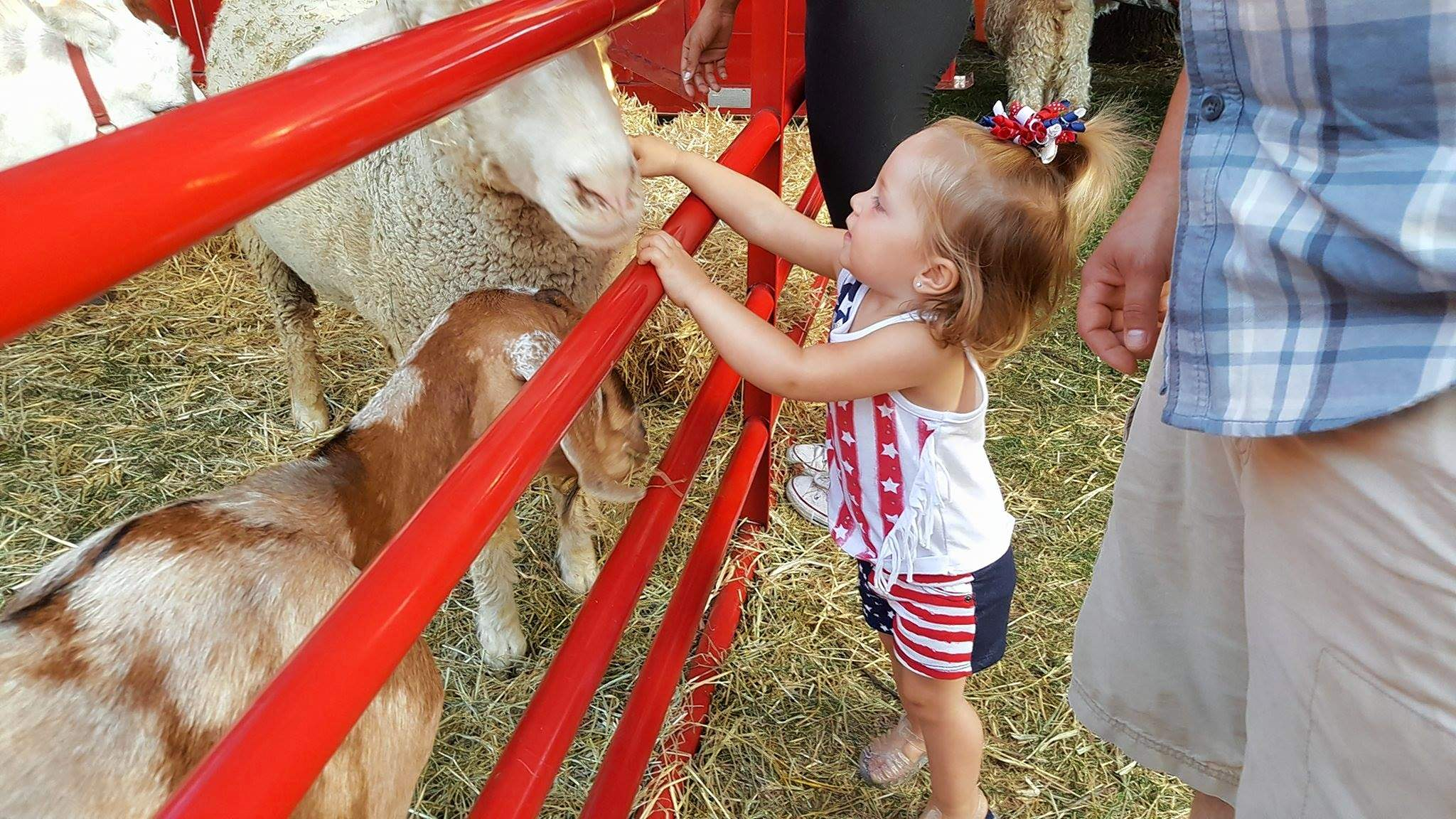 Hayden Snider, 2, of Benton made some new friends at the petting zoo. The Rainbow Ranch Petting Zoo proved to be a favorite, sporting an assortment of animals including goats, sheep and llamas. Hayden's parents are Brandon Snider and Kayla Williams.