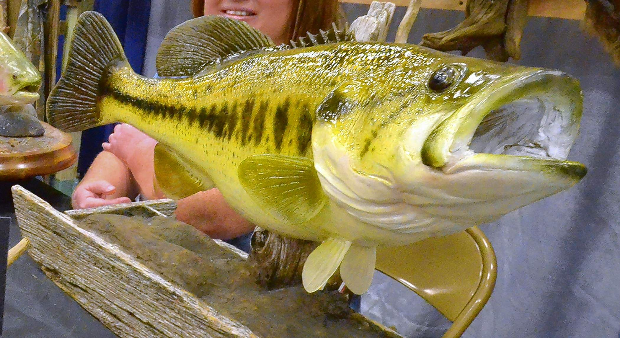 A beautiful example of McGill's taxidermy skill is evident in this bass.