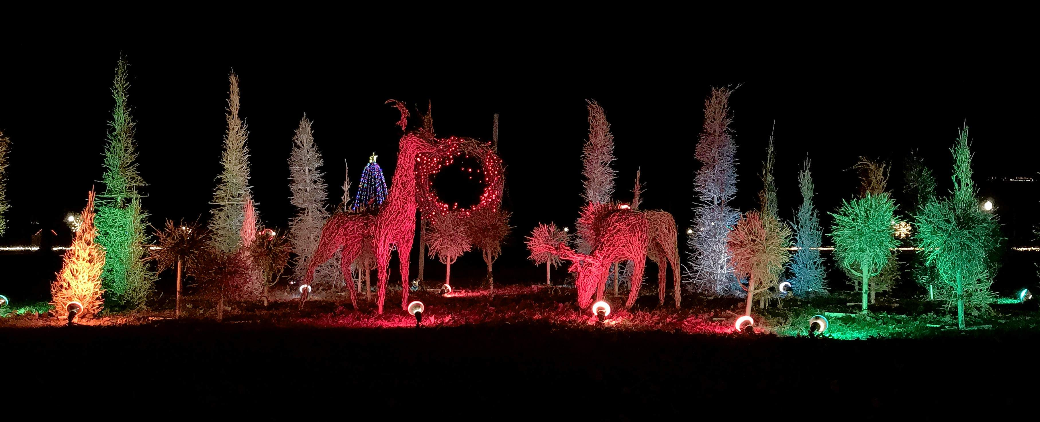 Deer are awash in soft light in this colorful and alluring display at the Du Quoin State Fairgrounds.