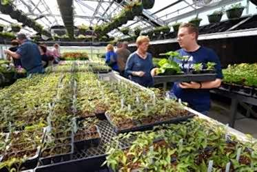 """Marion High School senior and Future Farmers of America member Logan Quance helped Rebecca Simmons select plants at the 14th annual FFA grand opening spring greenhouse sale Thursday. The Marion woman said her favorites are geraniums, """"but I'm also getting some tomato and pepper plants."""""""