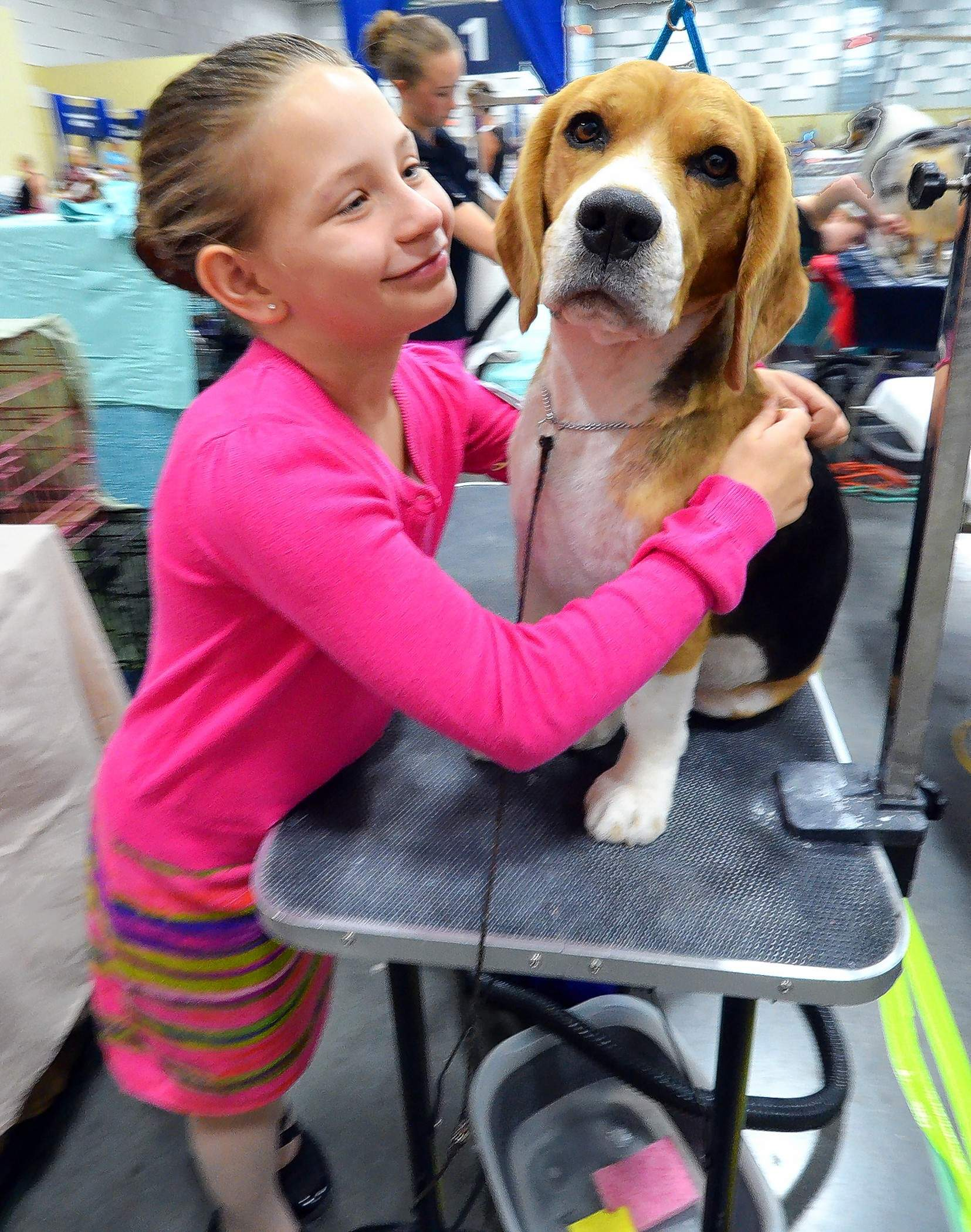 Payton Hickman from House Springs, Mo., and the family's beagle, Noah, enjoy the 2017 AKC show in Marion.