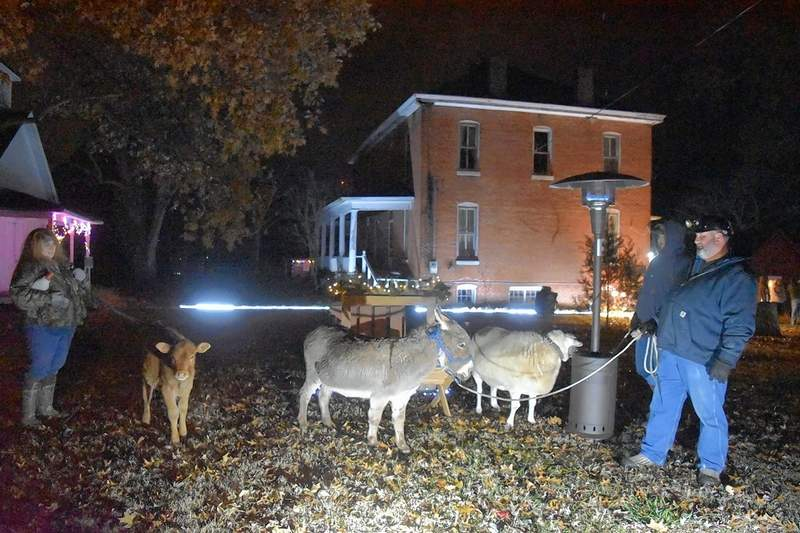 From left, Debbye Horton, Matthew Horton and Matt Horton hold a calf, burro and sheep in preparation for including the animals in a live Nativity scene Tuesday at the Saline Creek Historical Village and Museum in Harrisburg.