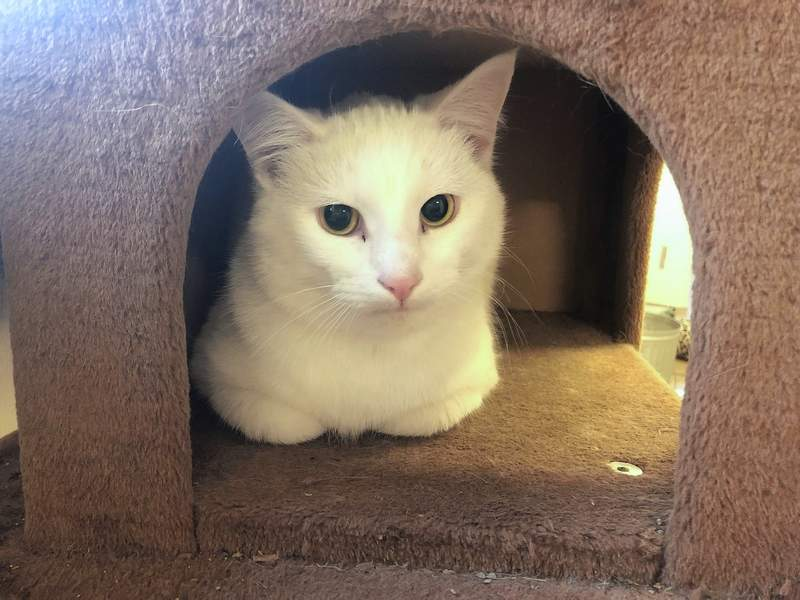 Snowball is looking for a home for Christmas.