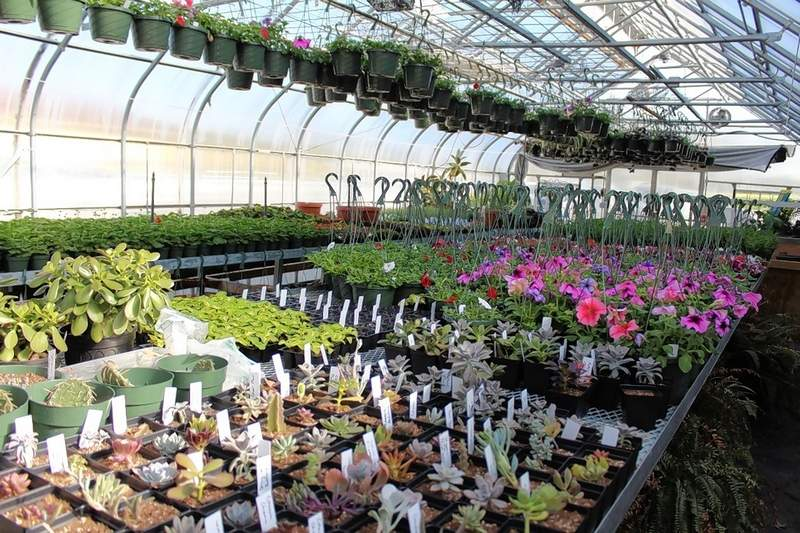 The greenhouse at Pinckneyville High School will be open for business Friday afternoon.