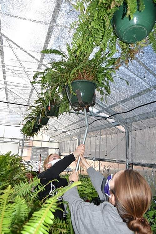 Harrisburg FFA Reporter Vivian Fuerback, left, helps FFA adviser Cacy Ellis hang a fern basket.
